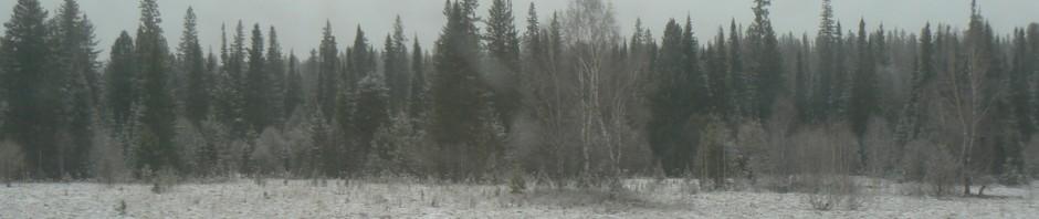 Taiga in Siberia