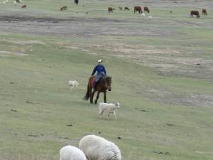 Gorkhi Terelj Young Horseman